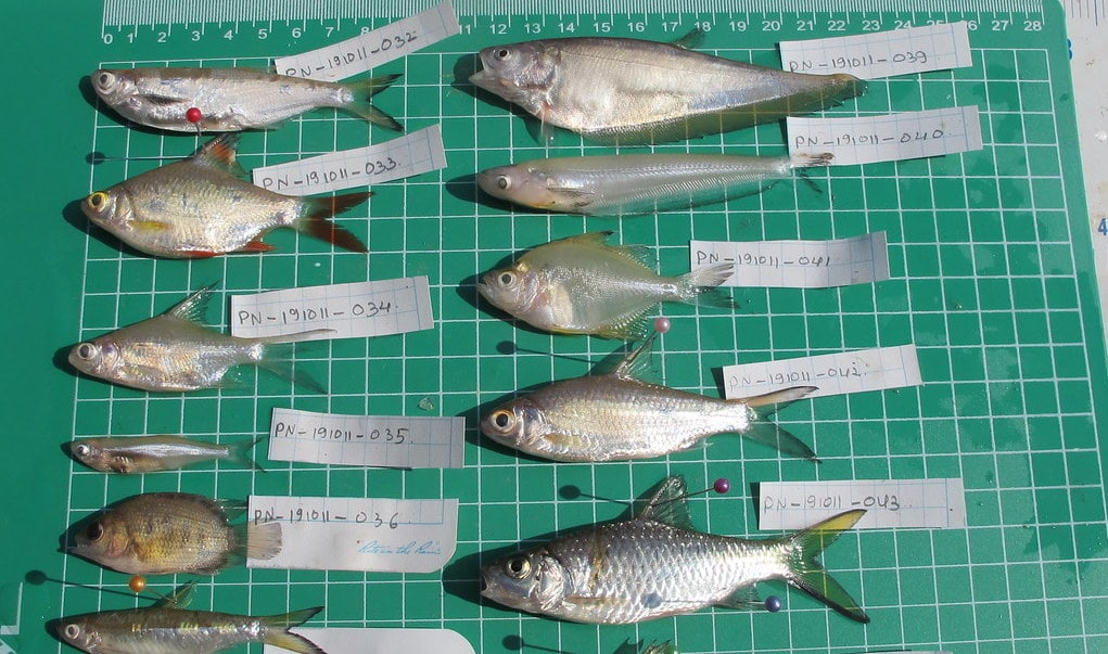 Fish Species Diversity is Significantly Lower in Reservoirs Than in Rivers, HSC Projects