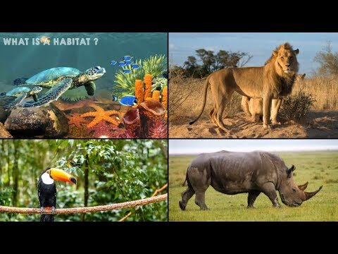 , Natural Habitats have Significantly more Irregular Shapes than Man-Made Habitats, HSC Projects, HSC Projects